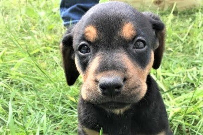 The Puppy Diaries- May 24