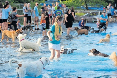 Dog Day at the Pool is August 22