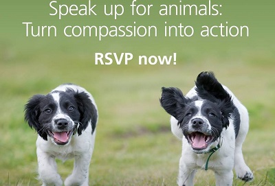 Speak up for animals!