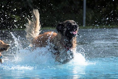 Dog Day at the Pool was a ton of fun!