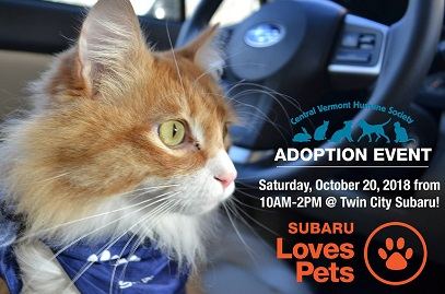 Kitten Adoption Event Oct 20