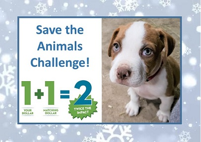 Only till Dec 22- Help us make our $15,000 Save the Animals Challenge!