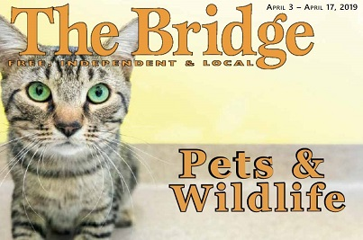 Read our recent story written by The Bridge!