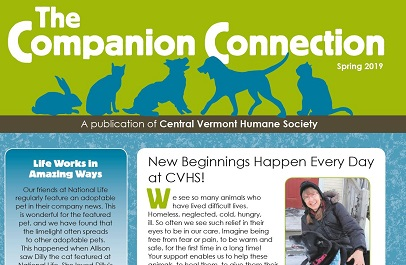 Our Spring Companion Connections is here